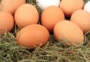 Das Ei: Von der Henne ins Regal