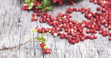 Die rote Perle des Waldes