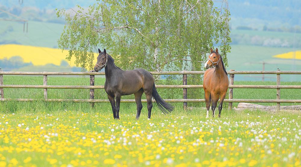 Pferde sind vielseitig