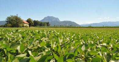 Soja – Vom Feld auf den Tisch